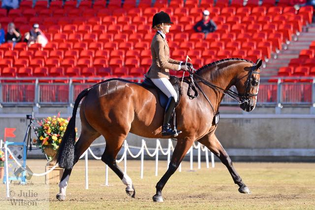 sydney royal easter show horses 2014 world-#36